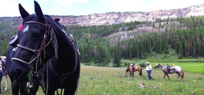 Un ranch pour votre séjour équestre à Gros Ventre, USA